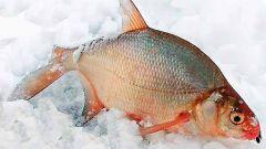 Как ловить леща зимой на водохранилище