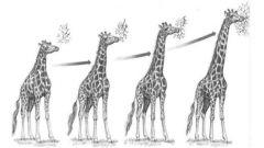 Как Ламарк объяснял ход эволюции у растений и животных