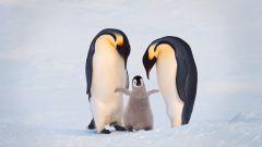 10 моногамных животных, которые находят себе пару на всю жизнь