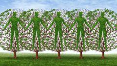 """""""Дерево держится корнями, а человек друзьями"""": значение фразеологизма и толкование"""
