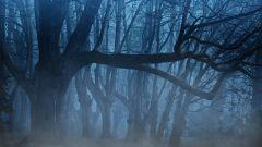 Топ-5 жутких и таинственных лесов