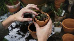 Топ-7 магических растений для дома