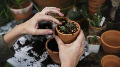 6 причин, чтобы пересадить цветы
