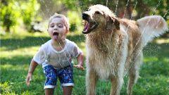 Дети и животные: плюсы и минусы содержания домашних животных в семьях с детьми