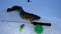 Как и на что ловить налима зимой