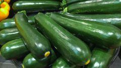 Как правильно выращивать кабачки и цуккини
