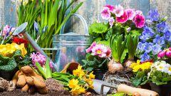 Что нужно обязательно сделать в цветнике в мае