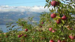 Чем опрыскивать деревья после цветения от вредителей и болезней