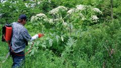 Как защитить ребенка от садовых ядовитых растений