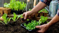 Лунный посадочный календарь садовода-огородника на июль 2019