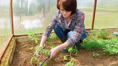 Лунный посадочный календарь садовода-огородника на июнь 2019