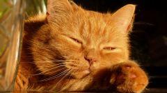 Что делать, если у кота слезятся глаза
