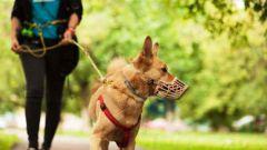 Как правильно выгуливать собак  по закону