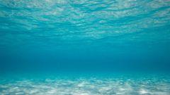 Как найти стратегию голубого океана для своего бизнеса