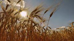 Праздники урожая у славян