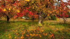 Осенняя подготовка садовых деревьев к зиме