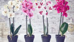 Как грамотно ухаживать за орхидеей