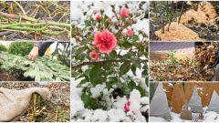Как отправить розы на зимовку