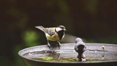 Интересные приметы о птицах