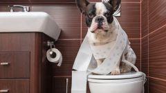 Процесс приучения щенка к туалету