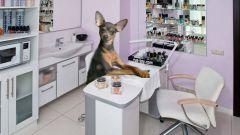 Как приучить собаку к стрижке когтей