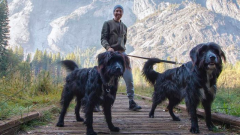 Плюсы и минусы путешествия с щенком