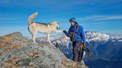 Поход с собакой: плюсы и минусы
