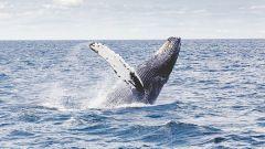 Необычные факты о китах