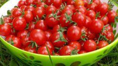 Томат «Свит черри»: плюсы сорта и особенности выращивания