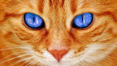 Кельтский гороскоп животных: Кот