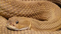 Кельтский гороскоп животных: Змея