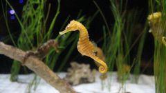 Кельтский гороскоп животных: Морской конек