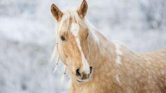 Кельтский гороскоп животных: Лошадь