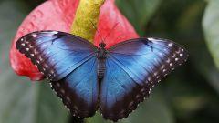 Кельтский гороскоп животных: Бабочка