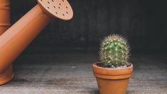 Правила полива комнатных растений