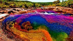 Удивительная планета: многоцветная река Каньо-Кристалес
