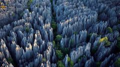 Удивительная планета: каменный лес
