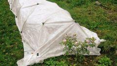 Лучшие материалы для укрытия многолетних цветов на зиму