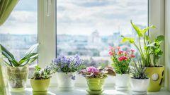 Правила ухода за домашними растениями