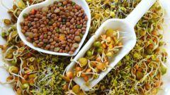 Как использовать проростки в пищу