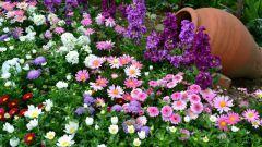 Как выбрать неприхотливые цветы для своего участка
