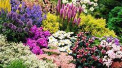 Какие неприхотливые цветы посадить на садовый участок