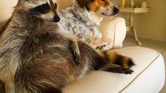 Необычные домашние животные и особенности их содержания