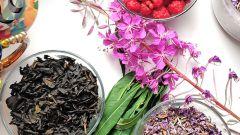 Как заготовить иван-чай: пошаговые фото