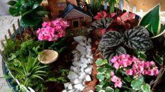 Как сделать мини-сад дома
