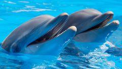 7 заблуждений людей о дельфинах