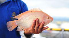 7 видов рыбы, которые не стоит есть