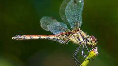 Какие насекомые относятся к водным