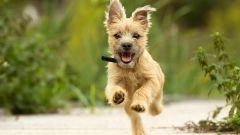 Как правильно выгуливать собак