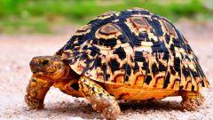 10 интересных фактов о черепахах
